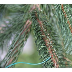 LS-40 leaf temperature sensor type ΔLA-C on Norway spruce