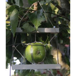DF Dendrômetro para Frutas e Vegetais