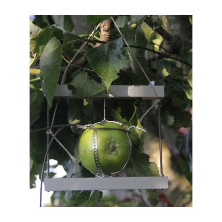 DF Dendrómetro para Frutas y Vegetales