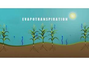 Evapotranspiração